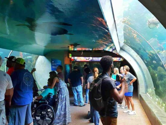 You Don't Need Kids To Have Fun At The Florida Aquarium | Things To Do In Florida | Best Aquariums In the United States | Follow Me Away Travel Blogs | Florida Travel Tips