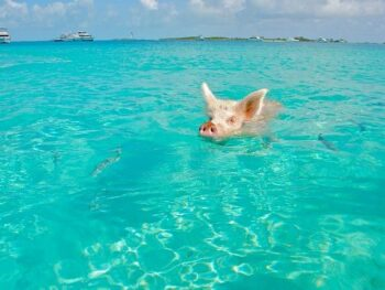 Top 5 Best Things To Do In The Bahamas   Tips For Visiting The Bahamas   What To Do In The Bahamas   Complete Bahamas Guide   Bahamas Travel Tips   Top Things To See And Do In The Bahamas Islands