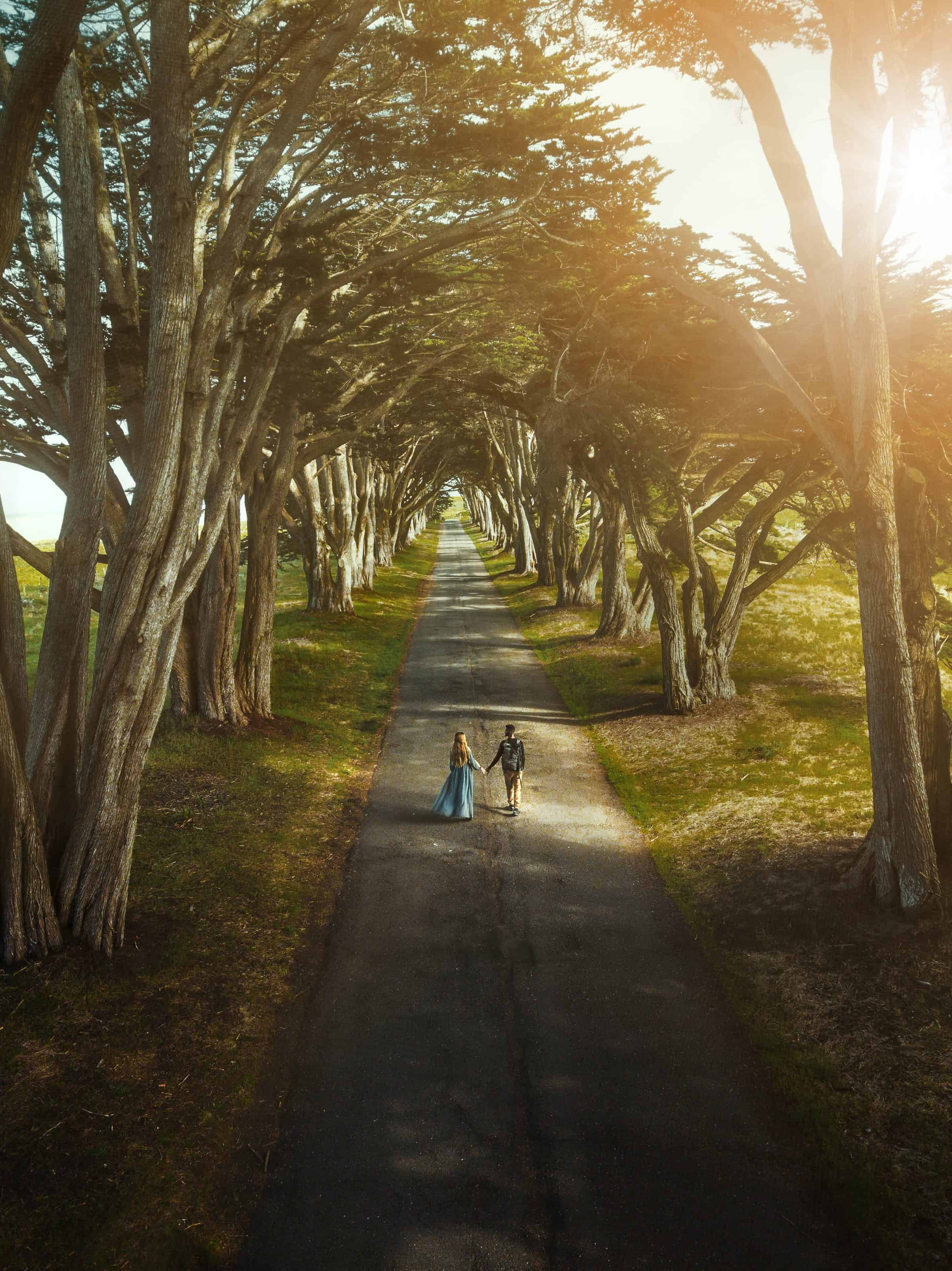 Cyprus Tree Tunnel In Point Reyes National Seashore is perfect for photography and sunset! #california #travel #weddingphotos #couples
