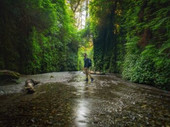 Fern Canyon Is A Great Stop On The Perfect Northern California Road Trip Itinerary