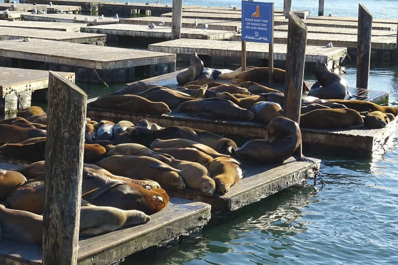 See Sea Lions In San Francisco On The The Perfect Northern California Road Trip Itinerary