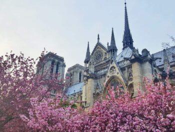 Springtime Flowers in Bloom at Notre Dame in Paris