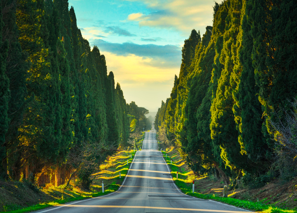 beautiful road in Tuscany Italy