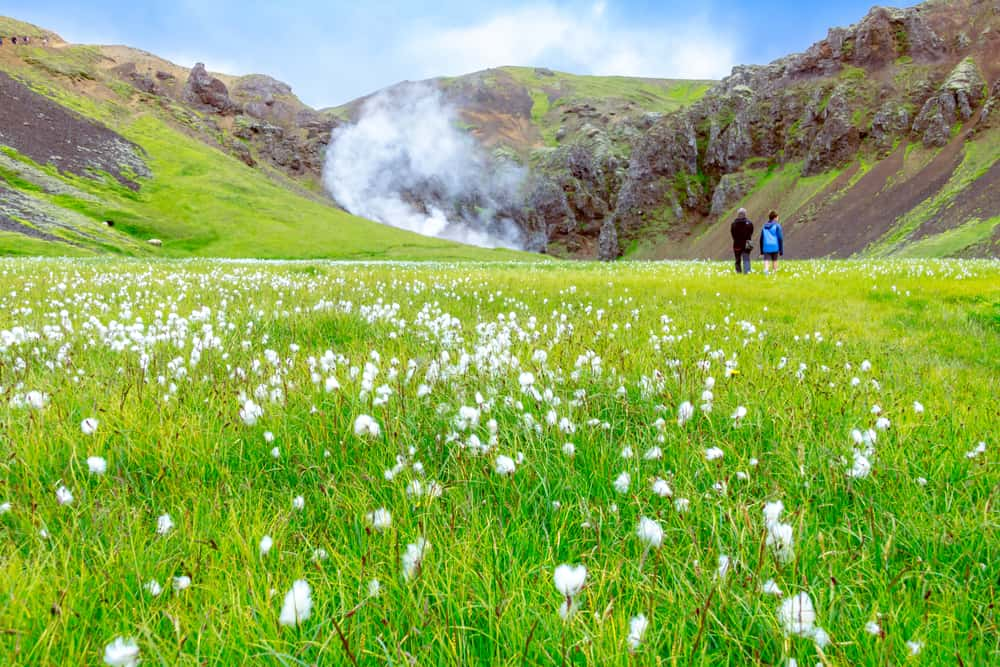luscious green grass fills the valley at Reykjadalur Hot Springs