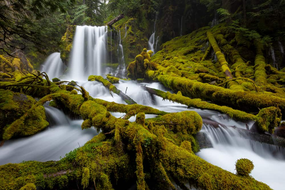 visit waterfalls in Oregon and the lush forests full of moss at the same time