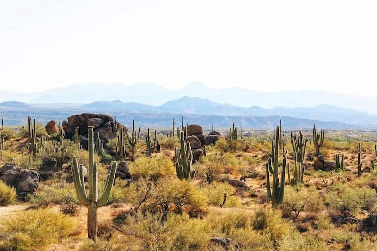 Granite Mountain view of cacti and boulders on one of the best hikes in Phoenix