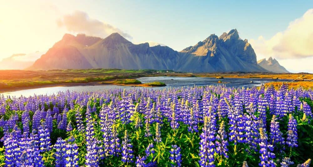 the East Coast is where to stay in Iceland to see Vestrahorn