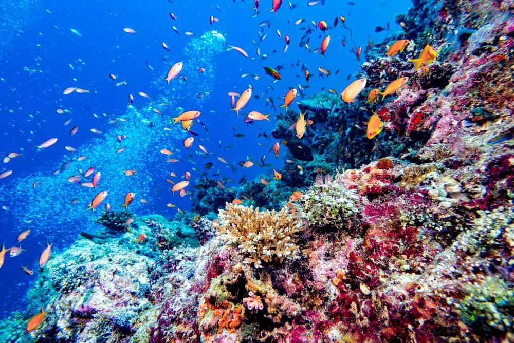 Photo of Wildlife You Might See While Diving on Your Maldives Honeymoon