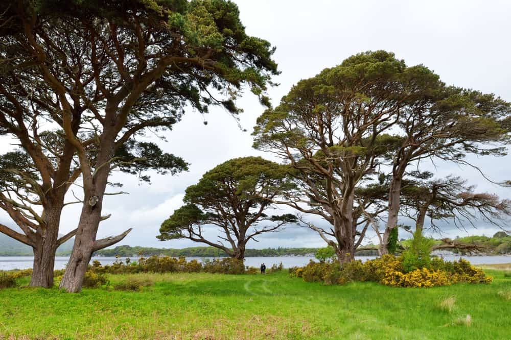 visit Muckross Lake for a wide variety of landscapes and rare species on your hikes in Ireland