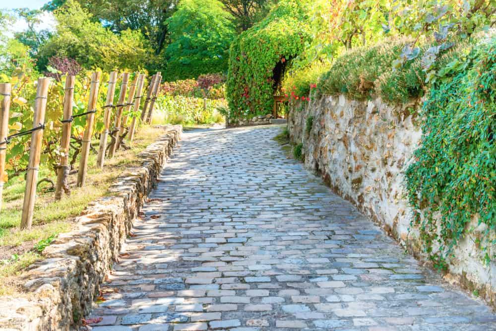 The last vineyard of Montmartre