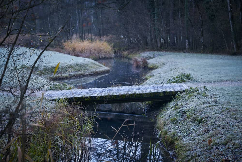 Photo of Weissenau Nature Reserve