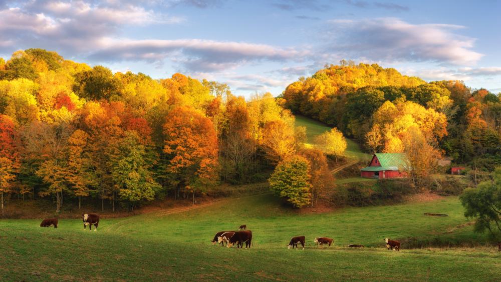 fall foliage in boone north Carolina