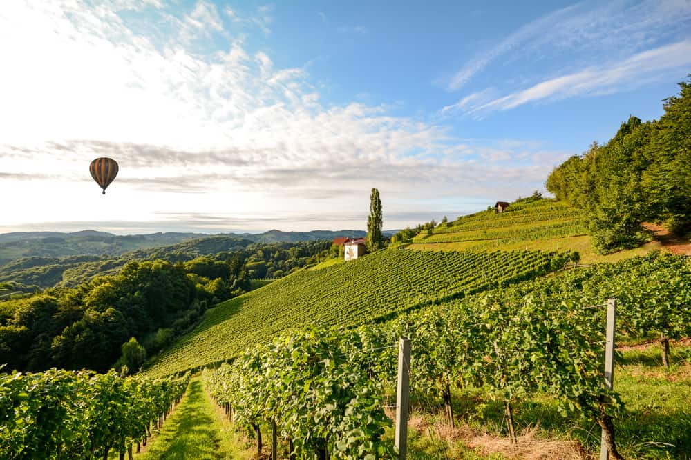 hot air balloon over wine vineyard