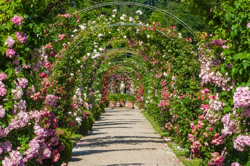 Baden Baden's Rosengarten auf dem Beutig on your Germany road trip