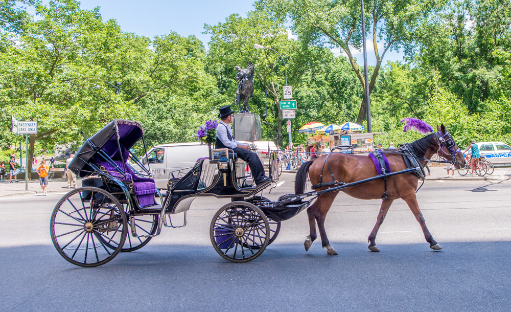 Horse drawn carriage on a sunny day