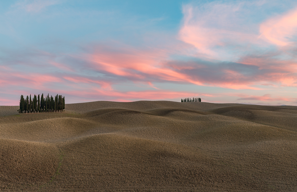 circular cypress trees in Tuscany