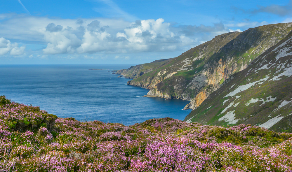 Slieve League Cliffs with pink flowers. Another of the beautiful places in Ireland