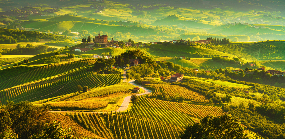 plains filled with wine vineyard with golden light