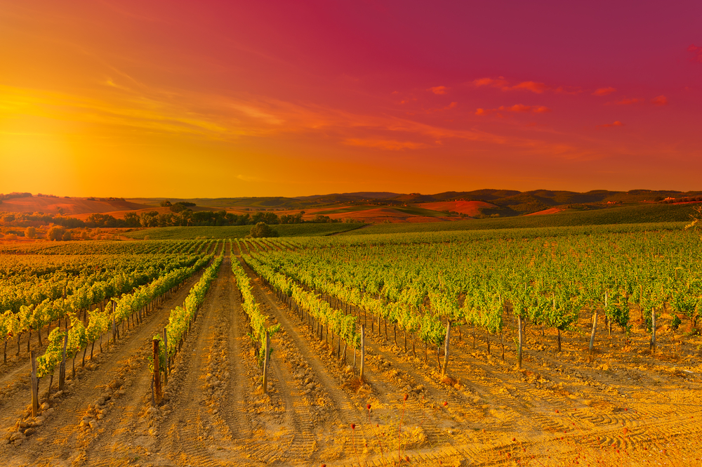 The Chianti region in Tuscany at sunset