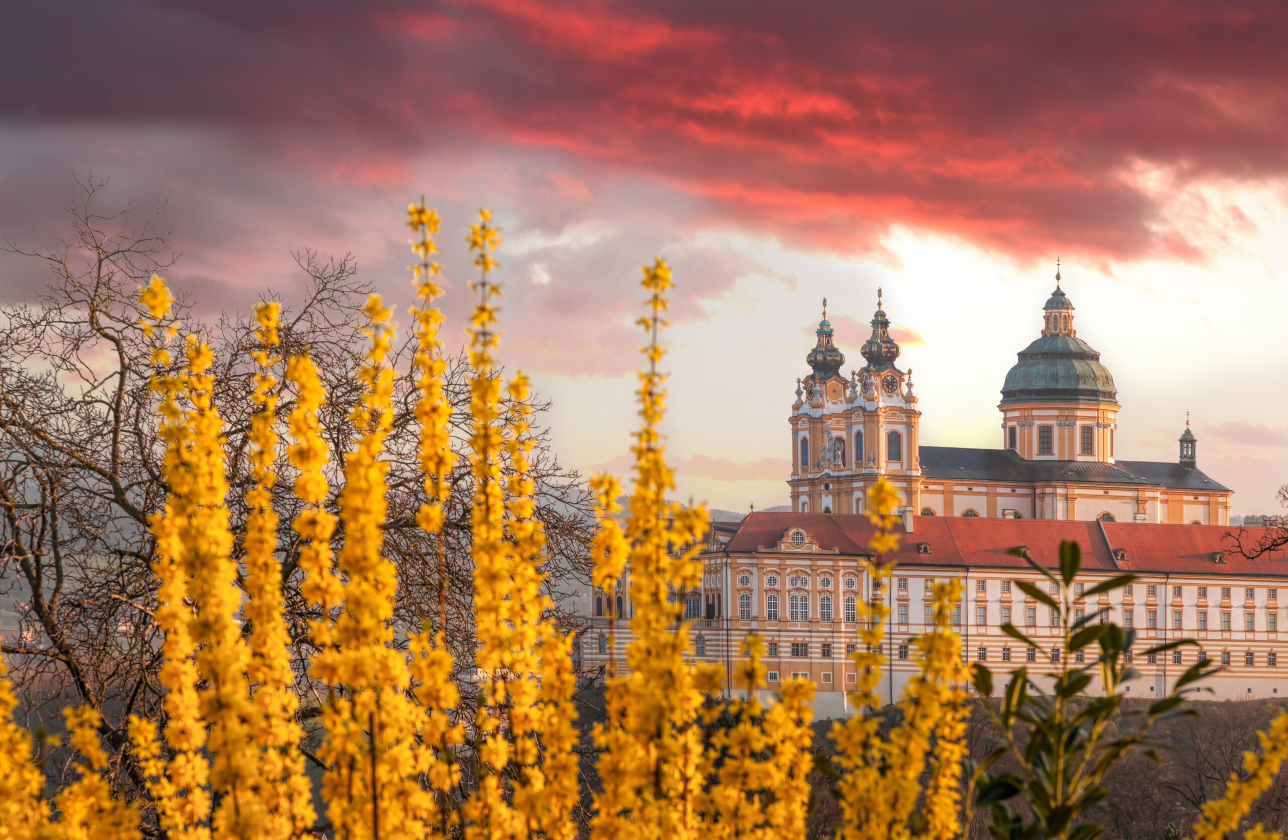 Photo of Melk Abbey in Austria. The elaborate and elegant Melk Abbey is featured on the right with dusty pink clouds in the sky. Stunning golden yellow flowers are situated in the foreground.