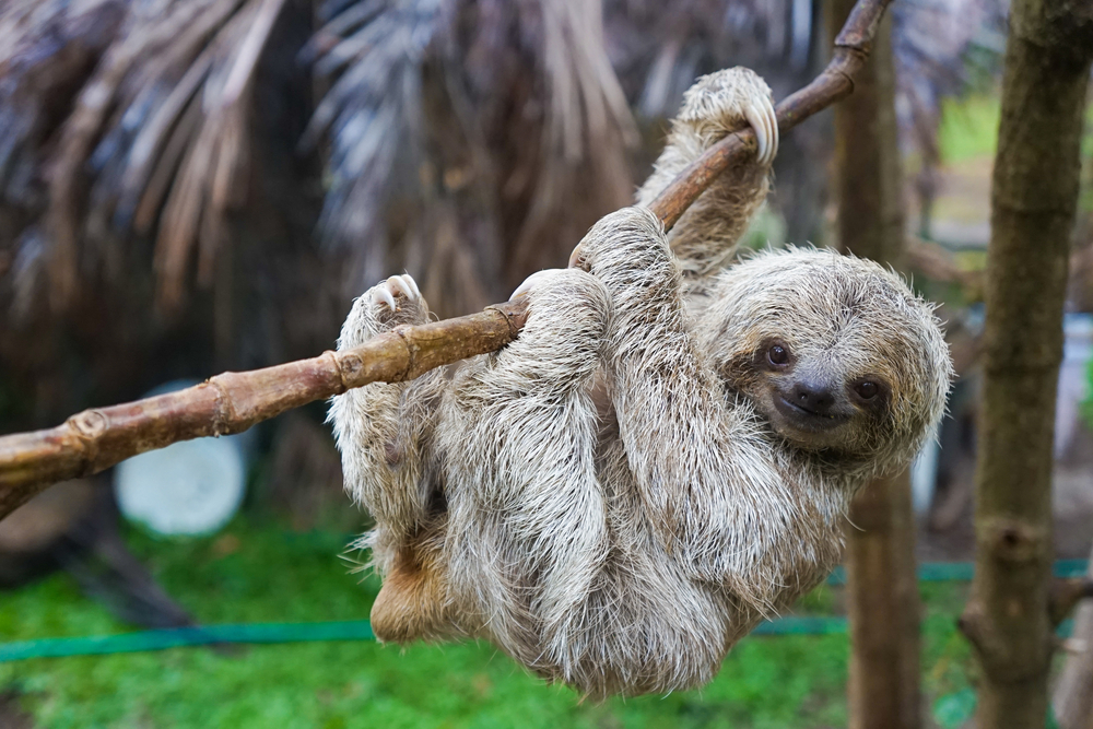 seeing a sloth on your costa rica honeymoon