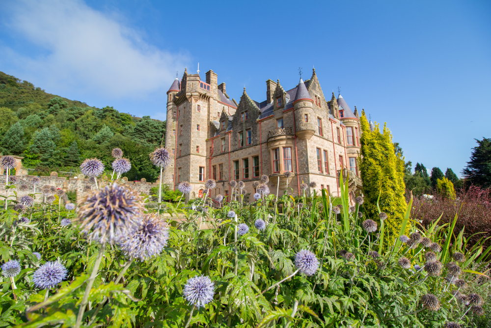photo of belfast castle in the background. In there foreground there are purple flowers and greenery. The sky is blue.