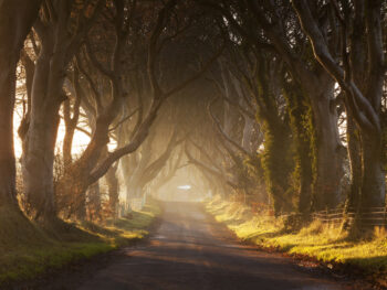 photo of the dark hedges, a line of birch trees down a road. The sun is coming through the branches. For Game of Thrones fans, this is a 'must' for things to do in Northern Ireland