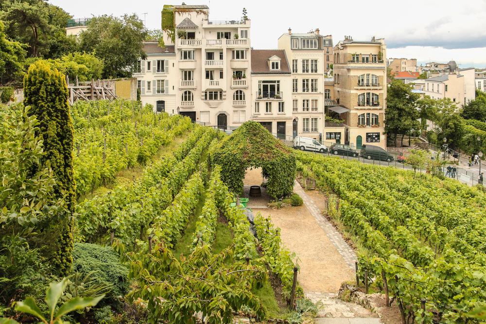 Hidden Gems in Europe Montmartre Vineyard