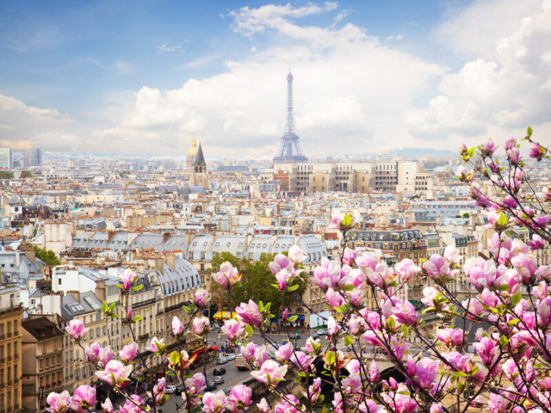 An overlook shot of springtime in Paris. Blooms rest in the foreground whilst the background highlights the Eiffel Tower.