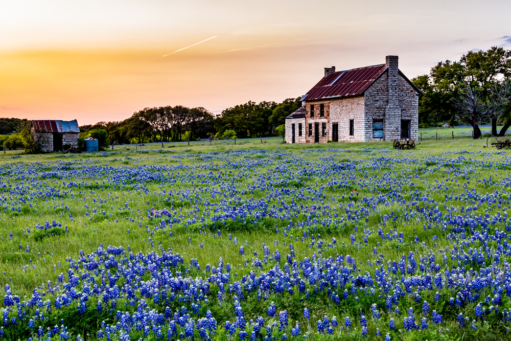 Texas Road Trip Bluebonnet House
