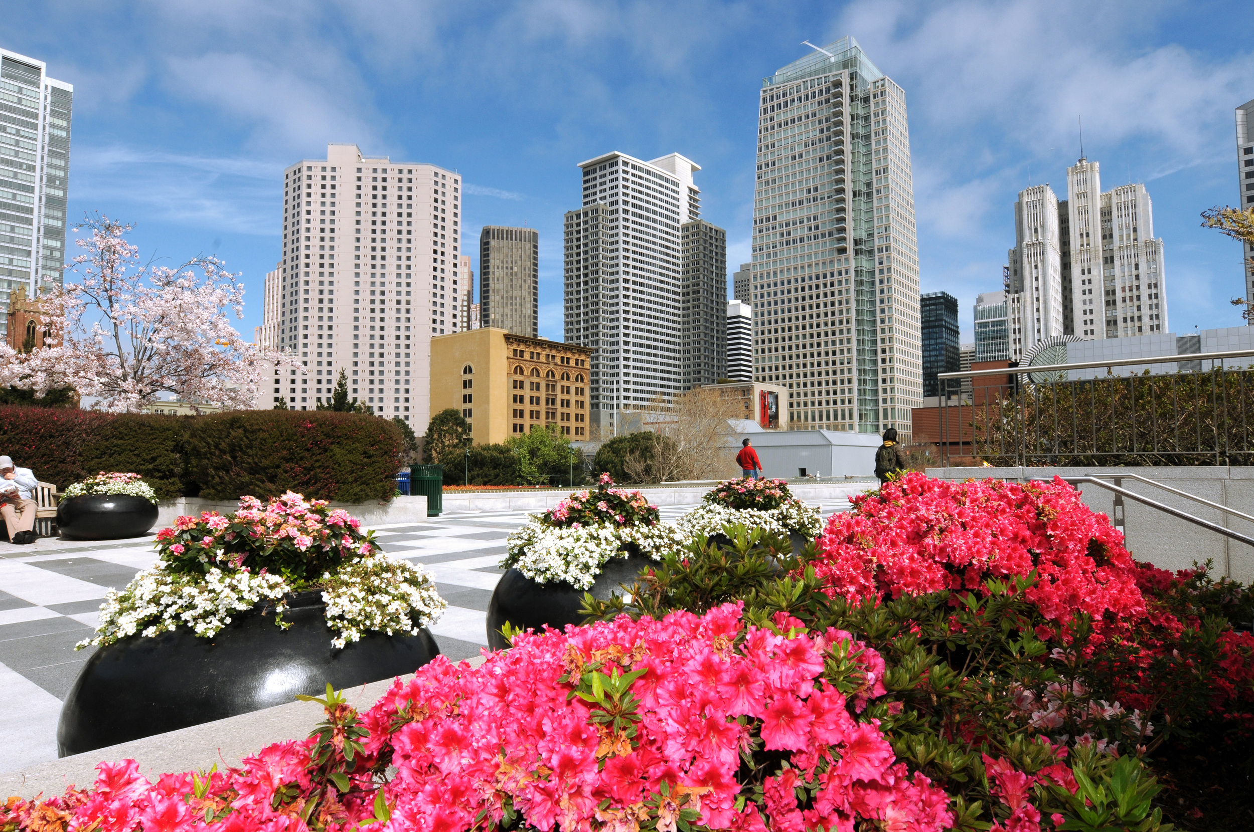Photo of Yerba Beuna Gardens in SOMA located in San Francisco. Bright pink flower are in the foreground and white flower are also seen in large globe-like planters. Tall city buildings are seen in the background.