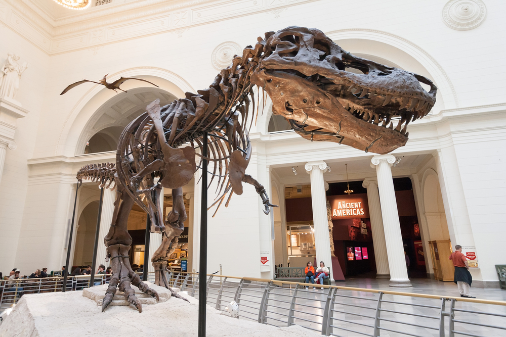 Sue the Dinosaur is one famous face you'll come to know on your 2 days in Chicago