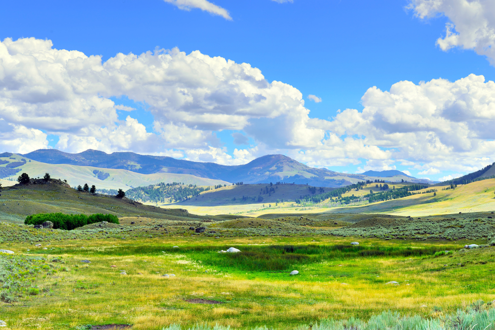 Photo of Lamar Valley, a scenic drive for your Yellowstone road trip.