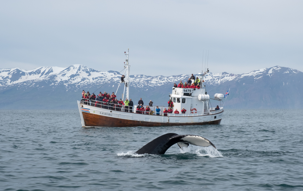 whale watching during your trip to Iceland in October