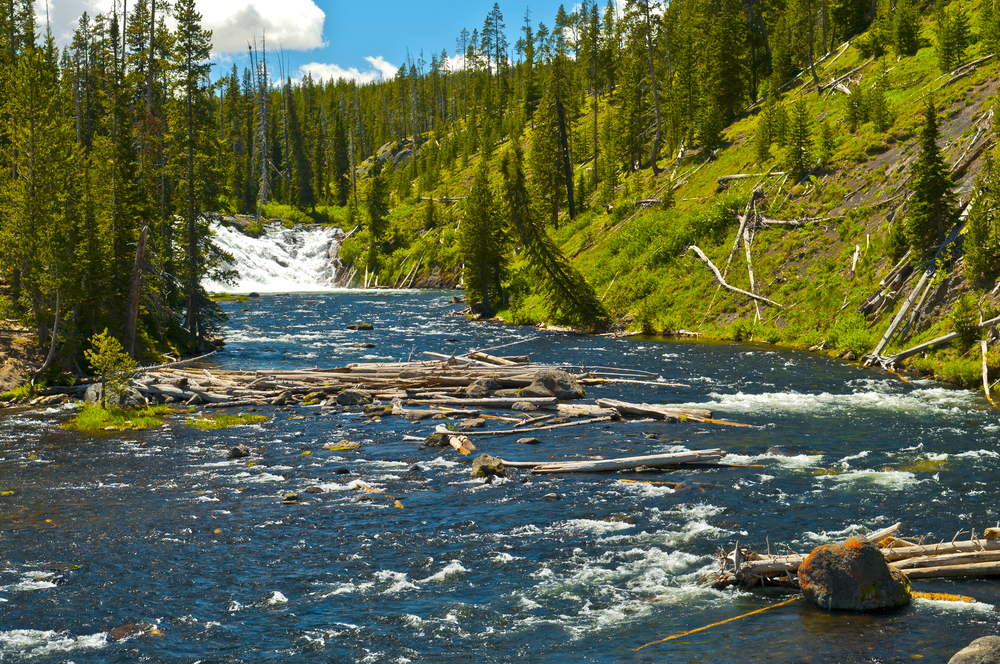 River flowing through Lewis and Clark National Forest on a sunny day