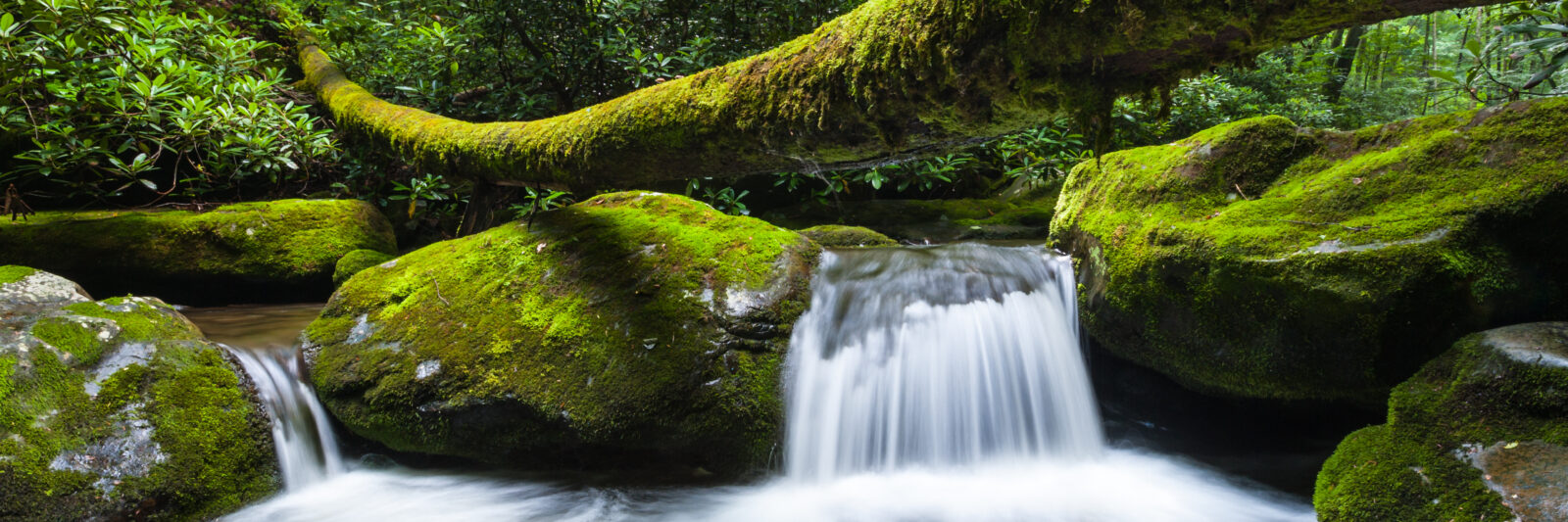 Photo of the Roaring Fork Stream located in the Great Smoky Mountain National Park. One of the great free things to do in Gatlinburg.