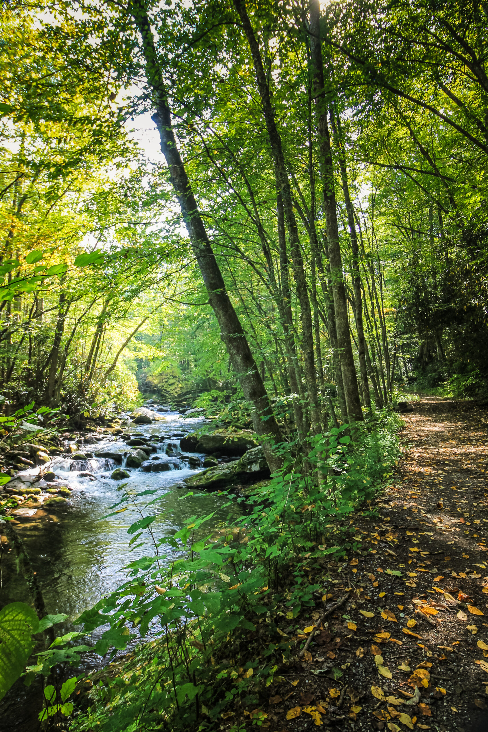 Photo of a wooded trail in Gatlinburg.