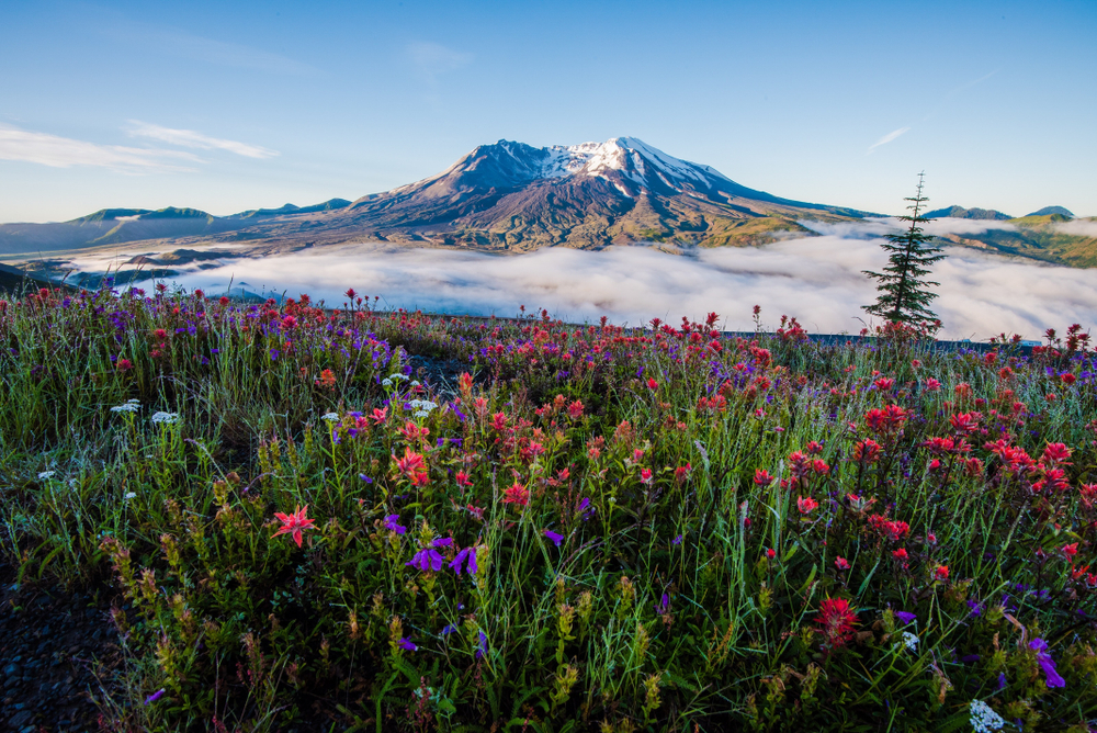 Mount Saint Helens is one of the best things to do in Washington State!