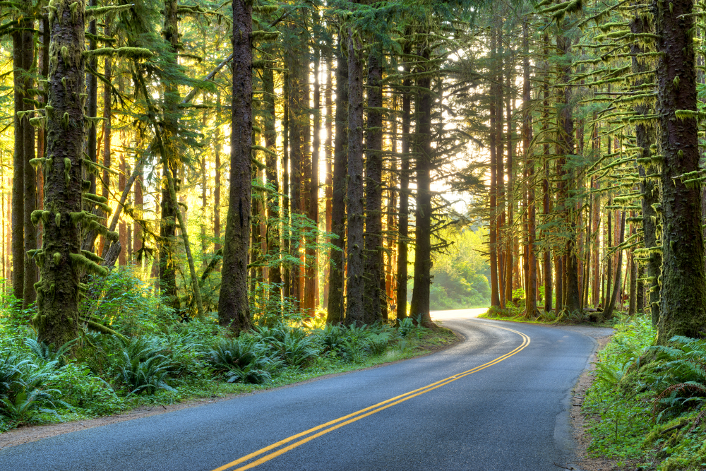The roads in Washington can take you to a whole new level while exploring.