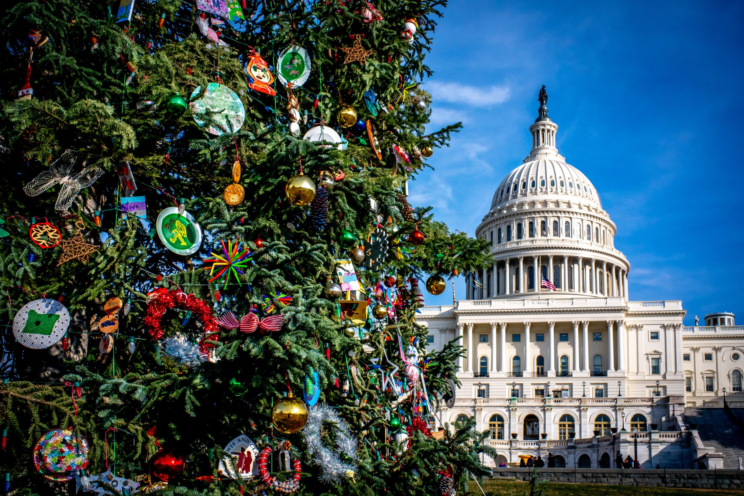 Photo of the Capital Christmas Tree in Washington DC with the Capital building in the background.