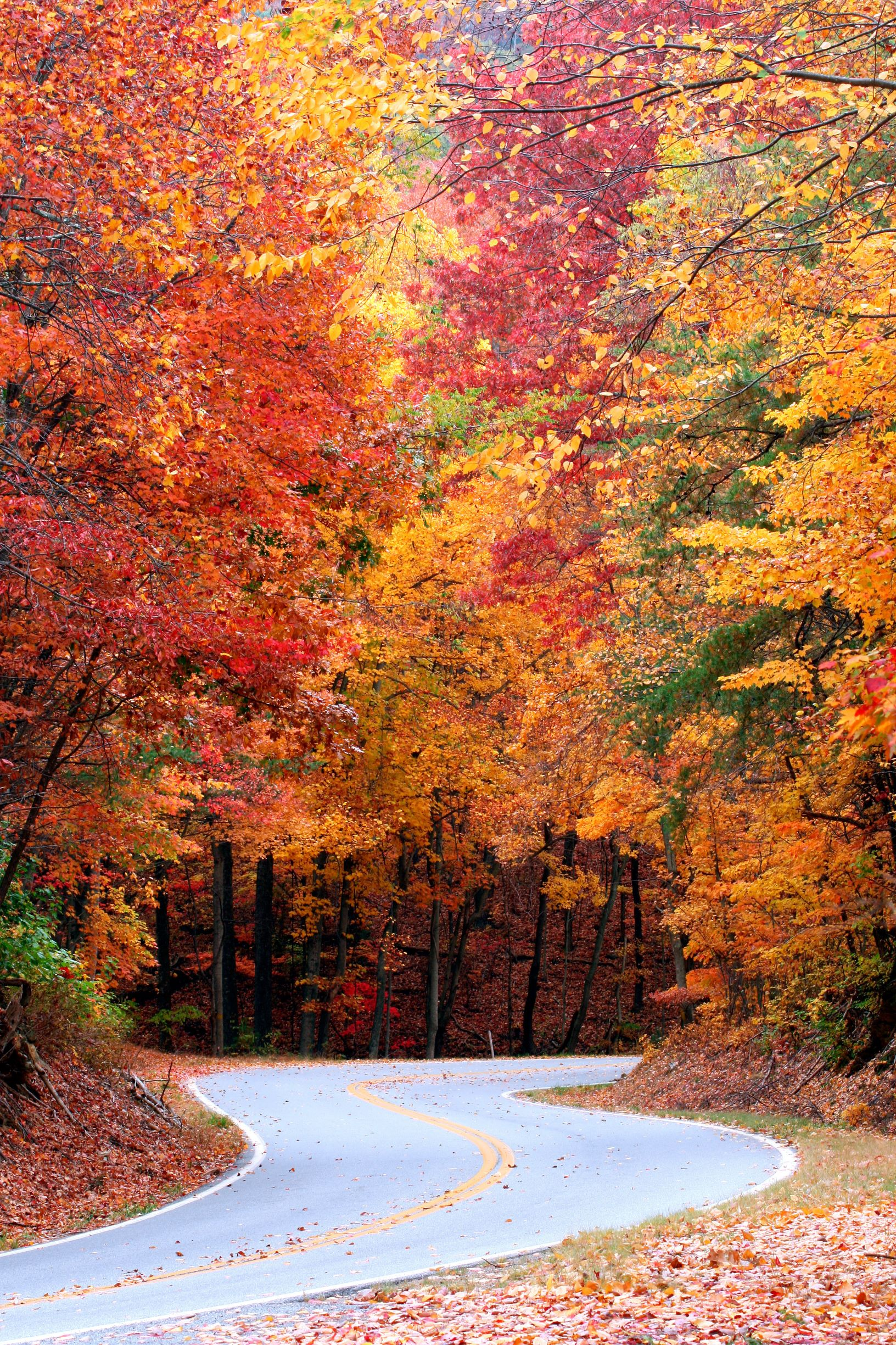 Curvy road with fall leaves near Fort Mountain