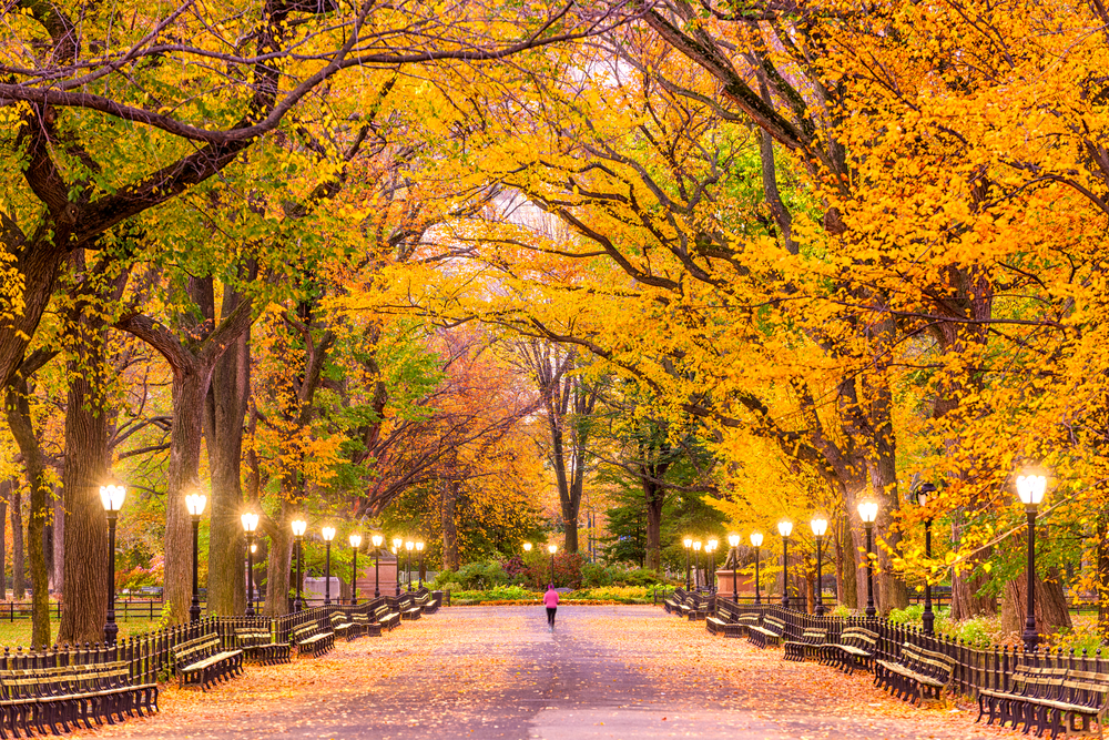 person strolling down path lined with golden trees and lights fall in the USA