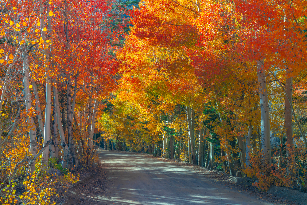 dusty walkway lined with red and orange trees fall in the USA