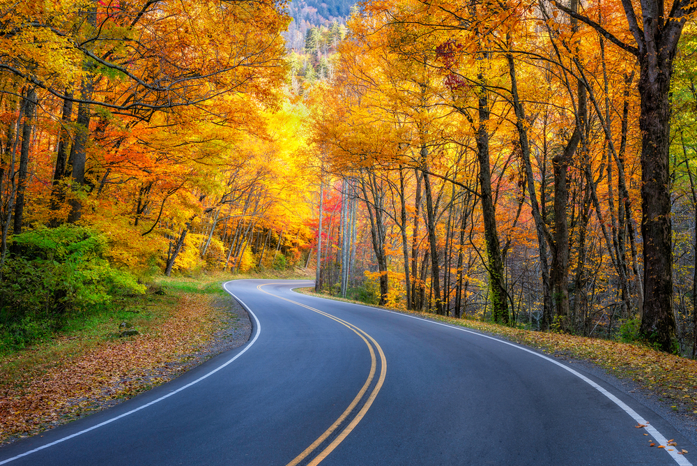 curved road lined with golden fall leaves