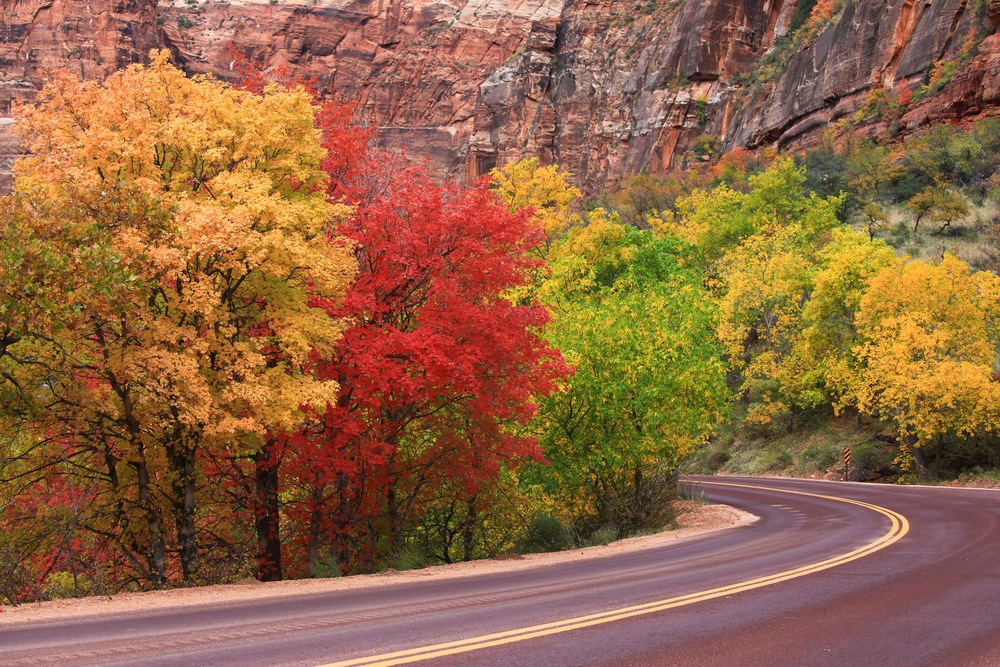 small clump of colorful trees along winding bend in the road