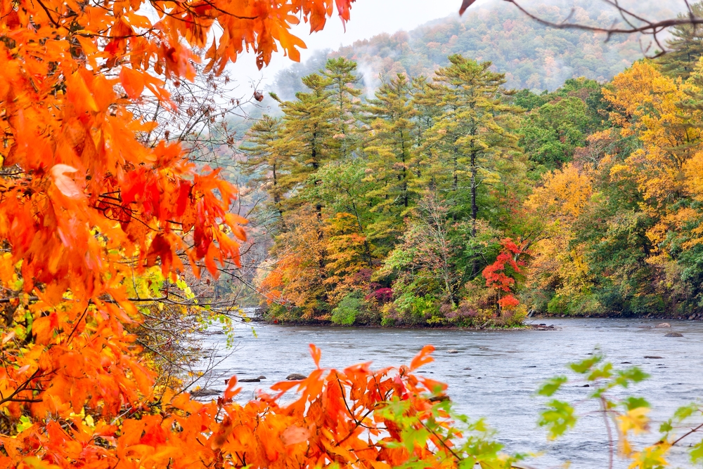 autumn trees around river with bright orange tree in foreground