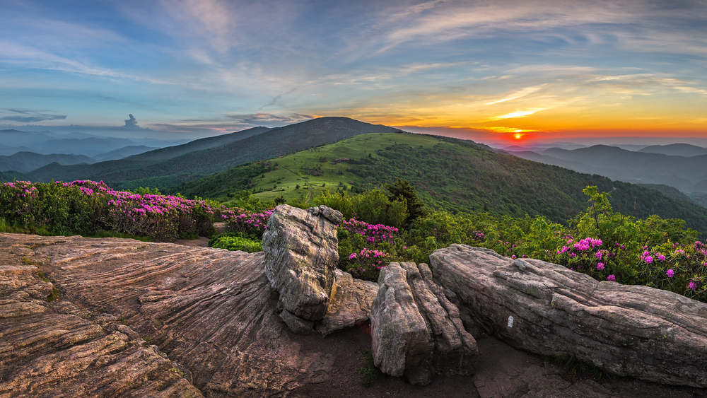 sunrise over Roan Mountain dotted with pink flowers