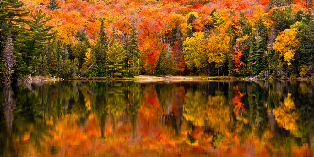 the vibrant colors of fall in canada at algonquin provinical park is breathtaking