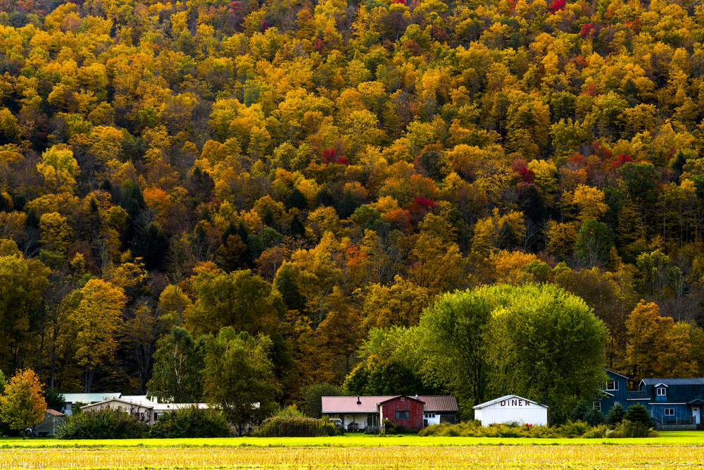 there's many beautiful colors to see in the catskills during fall in new york