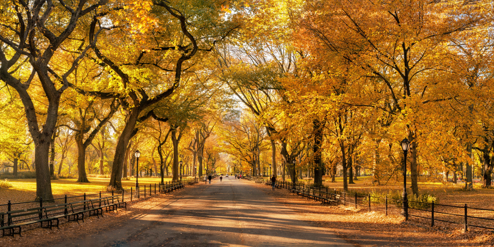 During fall in New York, the Mall in Central park comes to live with yellows and oranges